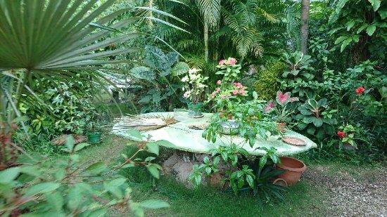 DSC_0447_large.jpg - Picture of Barney\'s Flower & Hummingbird Garden ...