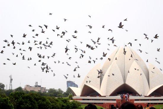 Budget Travel India
