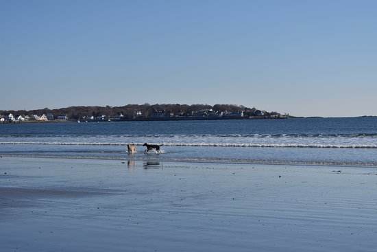 Lynn, MA: dogs frolicking on the beach