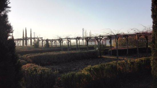 Tordandrea, Italia: Giardini