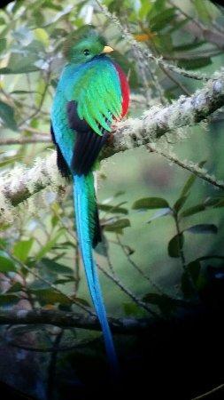 San Gerardo de Dota, Κόστα Ρίκα: IMG-20171209-WA0000_large.jpg