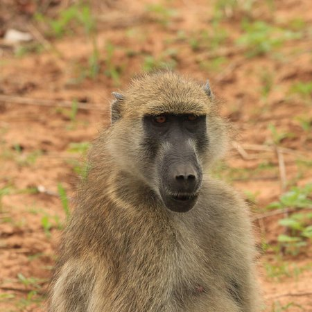 Kasane, Botsuana: photo1.jpg