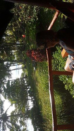 Carate, Costa Rica : IMG-20171205-WA0009_large.jpg