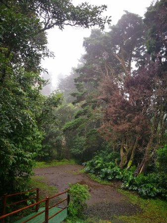 Cerro Plano, Costa Rica: IMG_20171207_152112_large.jpg