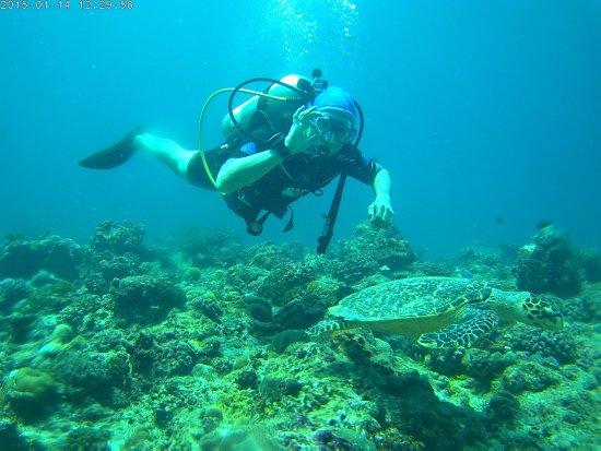 Maafushi Island: Turtle