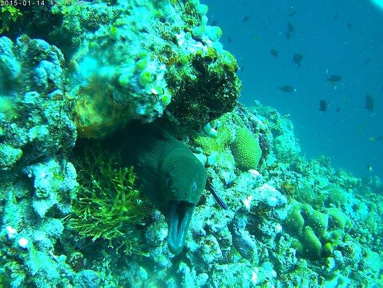 Maafushi Island: Scary moray eel