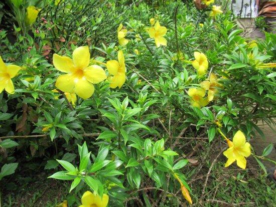 Papetoai, Polinesia Francesa: Jolies fleurs