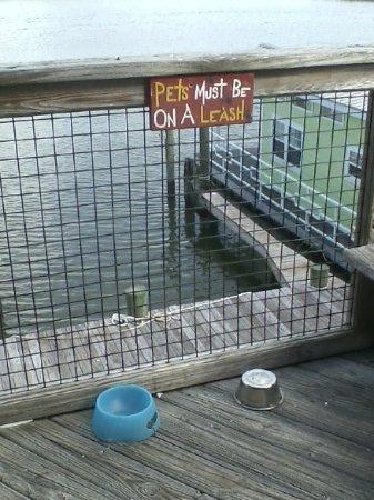 Up the Creek Raw Bar: pet-friendly restaurant in a pet-friendly town