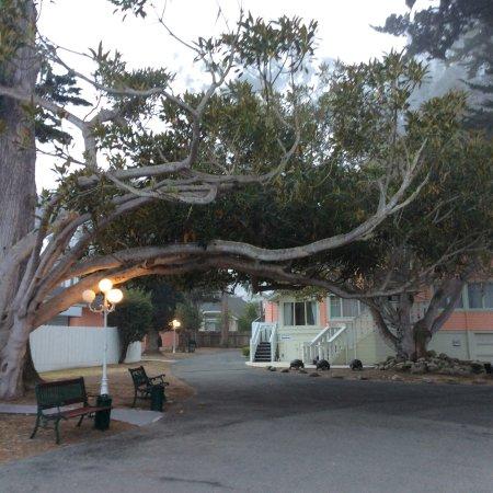 Butterfly Grove Inn: photo0.jpg