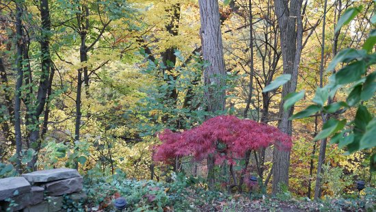 Fairport, NY: Garden view at Rochester Vacation House