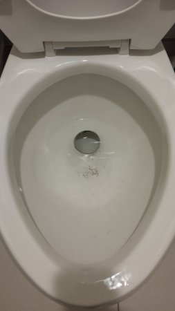 ‪‪Plantation‬, فلوريدا: Toilet after maintenance and not cleaned‬
