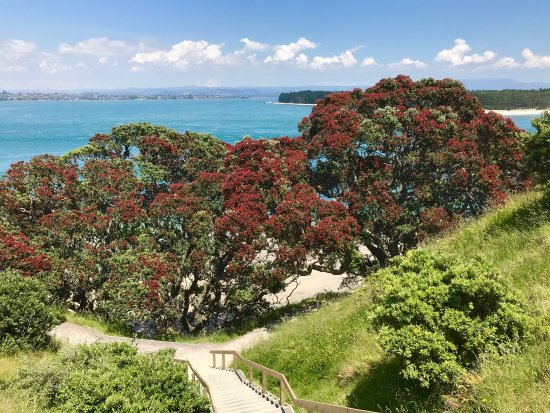 Mount Maunganui, Nova Zelândia: photo1.jpg