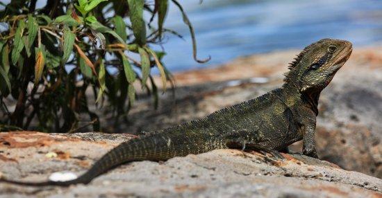 Bundaberg, Australië: not wary of visitors