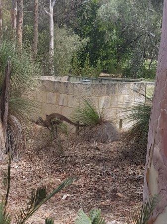 Yanchep, Australia: 20171210_141418_large.jpg