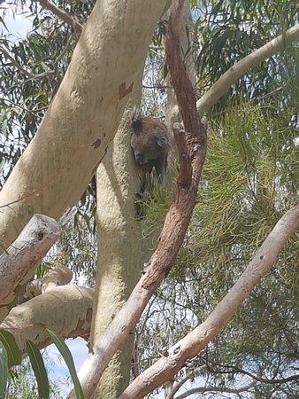 Yanchep, Australia: 20171210_141102_large.jpg