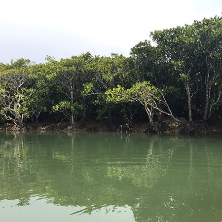 Mangrove Forested Area: photo1.jpg
