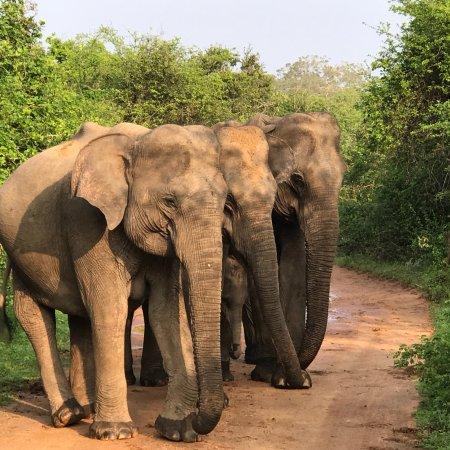 Tissamaharama, Sri Lanka: Yala Kings Safari