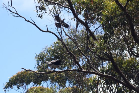 Arthur River, Australia: eluded the currawong this time