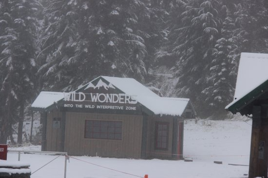 North Vancouver, Canada: Wild Wonders at Grouse