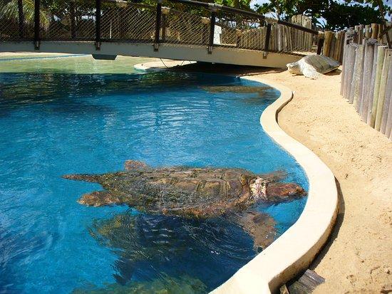 Mata de Sao Joao, BA: Tartarugas marinhas.