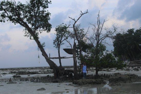 Dolphin Resort: beach near resort