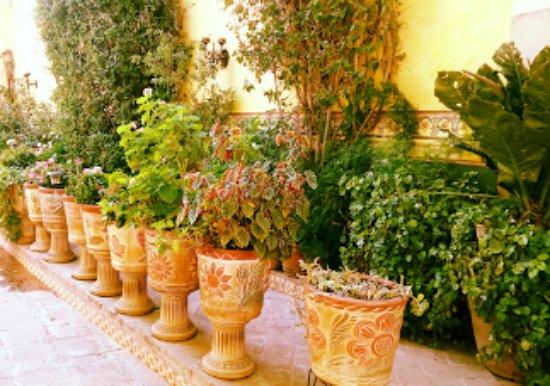 El mezquite bernal fotos n mero de tel fono y for Jardin 7 colores bernal