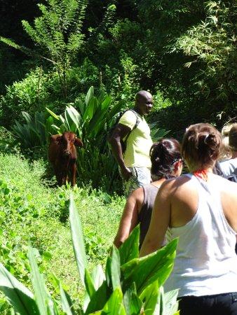 Buccoo, Tobago: Wanderung zum Wasserfall