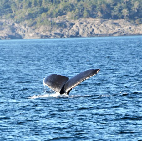 Eagle Wing Whale Watching Tours Review