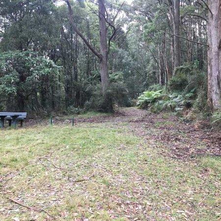 Healesville, Австралия: Mount Riddell