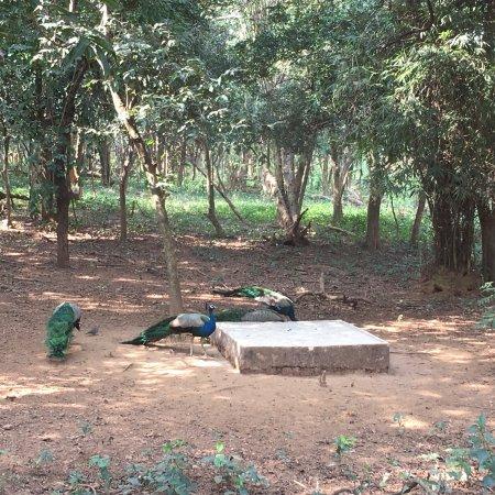 Nandankanan Zoological Park : photo1.jpg