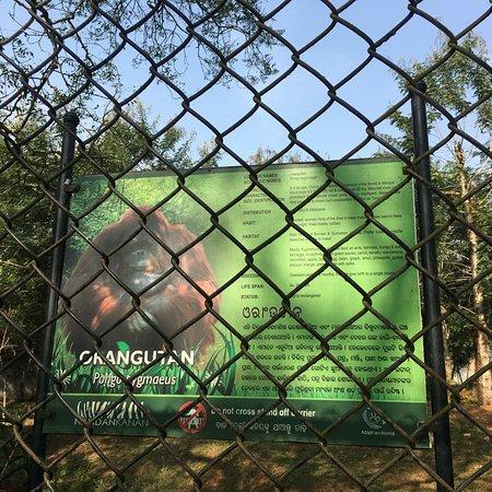Nandankanan Zoological Park : photo4.jpg