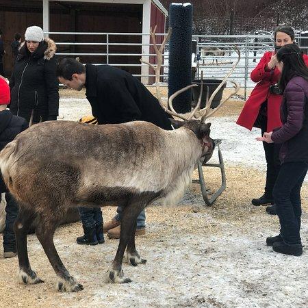 Leavenworth Reindeer Farm: photo1.jpg