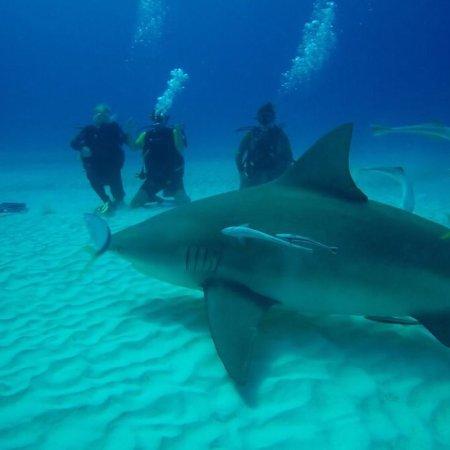 Always Diving & Water Sports : photo0.jpg