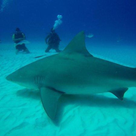 Always Diving & Water Sports : photo1.jpg