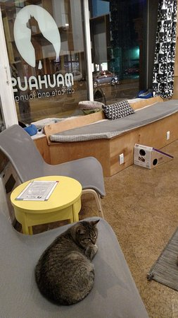 Maplewood, MO: Cats and people lounge together for a relaxing, adorable cafe experience.
