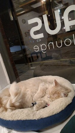 Maplewood, MO: All of the sweet residents of this cafe are adoptable.