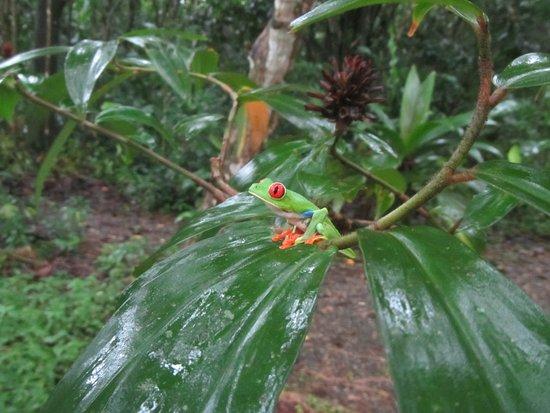 Puerto Viejo de Sarapiqui, Costa Rica: Einer der Bewohner