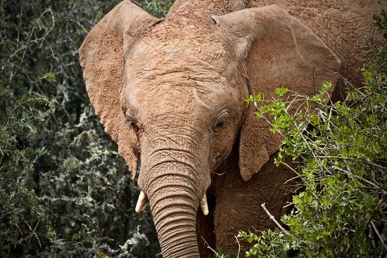 Addo Elephant National Park, South Africa: getting personal