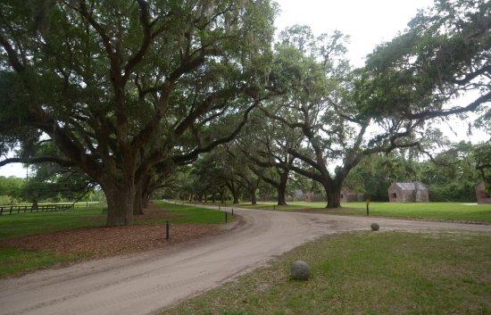 Mount Pleasant, Carolina del Sur: il giardino
