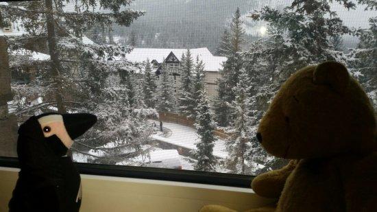 Fairmont Banff Springs: Yellow bear and Jennifer Penguin assess the view