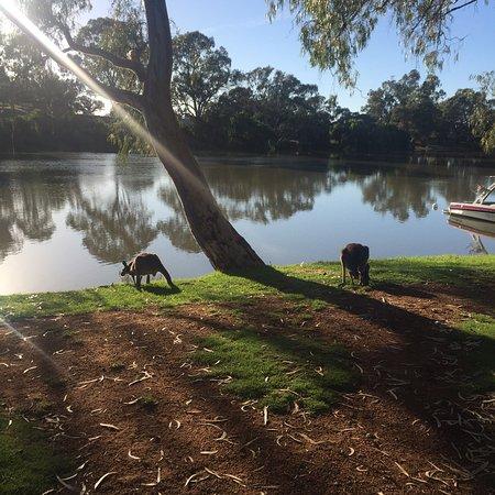 Renmark, Australia: photo0.jpg