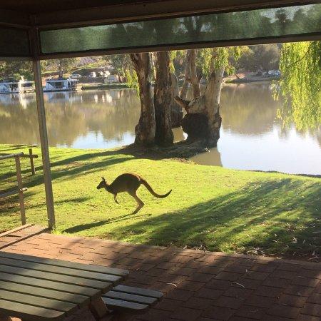 Renmark, Australia: photo1.jpg
