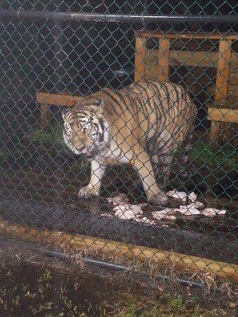 Catty Shack Ranch Wildlife Sanctuary: 20171208_194813_large.jpg
