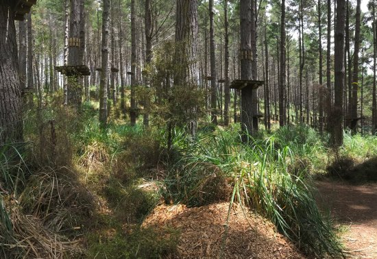 Tree Adventures: Woodhill forest