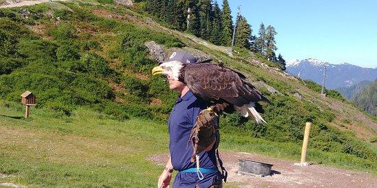North Vancouver, Canada: Bald Eagle