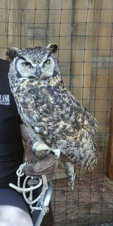 Vancouver-Nord, Canada : Eagle owl