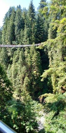 Vancouver-Nord, Canada : Capilano Suspension Bridge