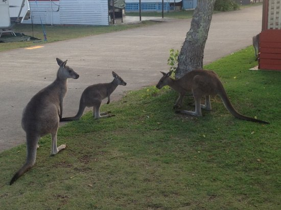 Lake Conjola, Australia: Local residents