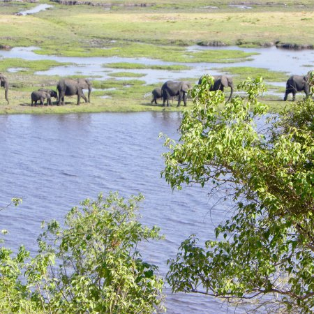 Kasane, Botswana: photo5.jpg