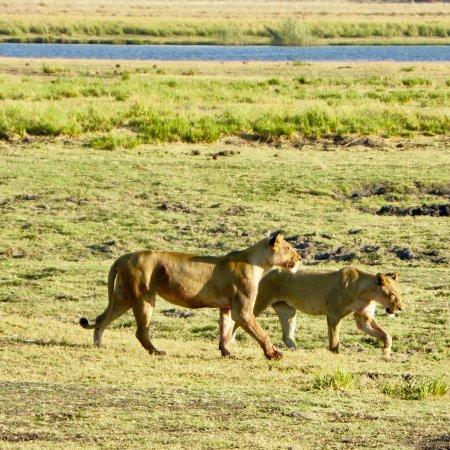 Kasane, Botswana: photo7.jpg